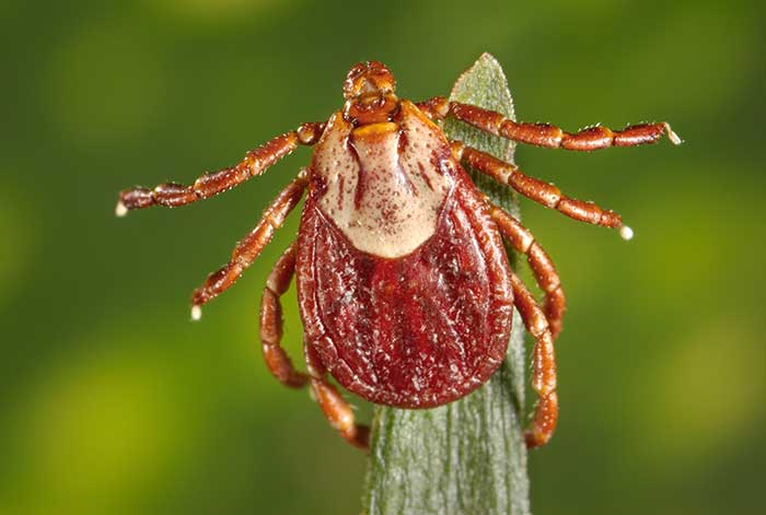 Ticks Are In Wyoming. Here's What To Look For.