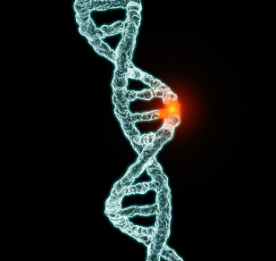 University Of Wyoming Researcher Looks To Genes To Solve Women's Reproductive Issues