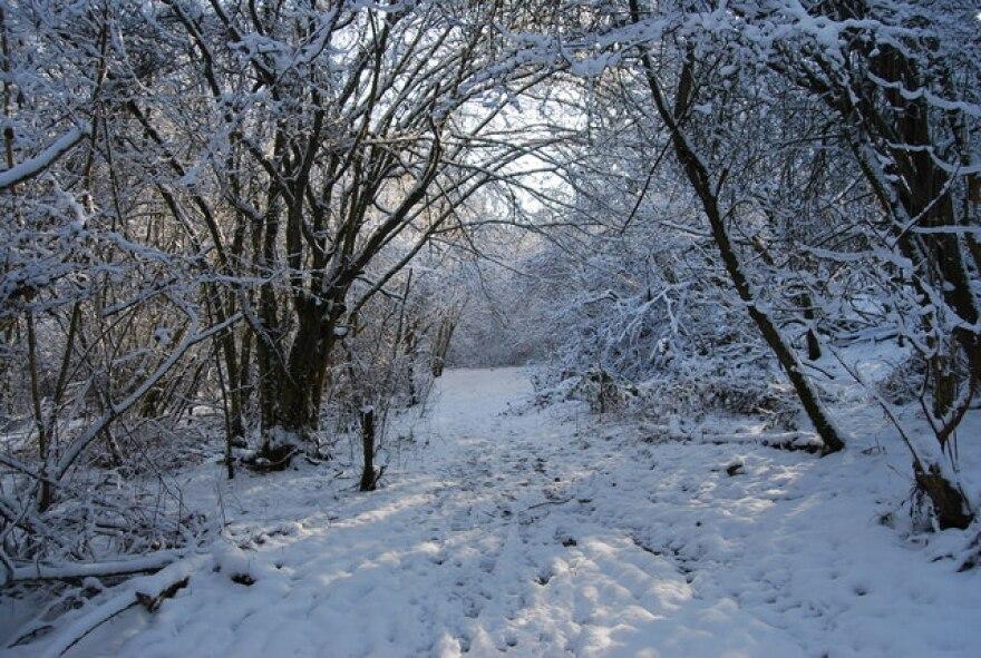snow_in_woods.jpg