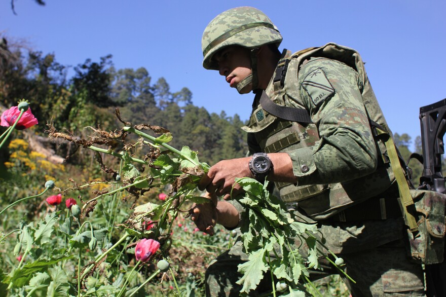 Isai Bello grew up in Nevada and California and later lived in South Carolina. When he moved back to his family's home state of Guerrero, Mexico, joining the military was the best way to make a clean living, he says. He earns about $30 per day eradicating poppies for the army.