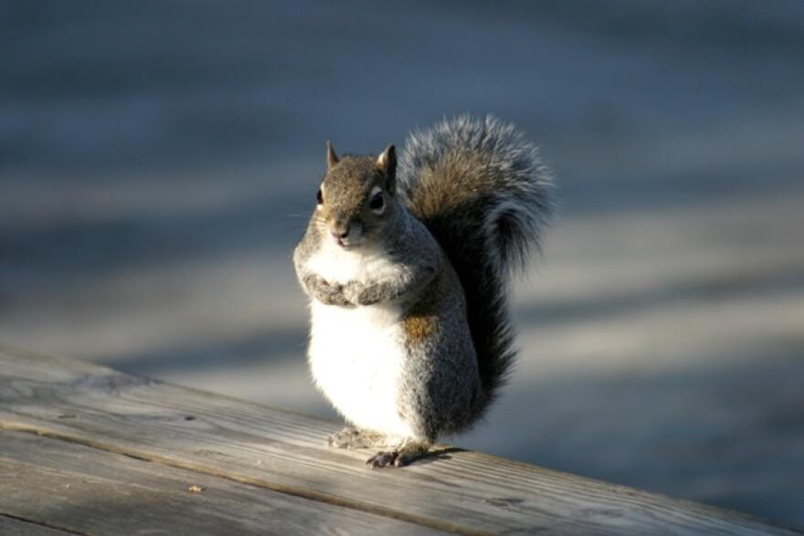 12-4-14_Squirrel_USF_R.jpg