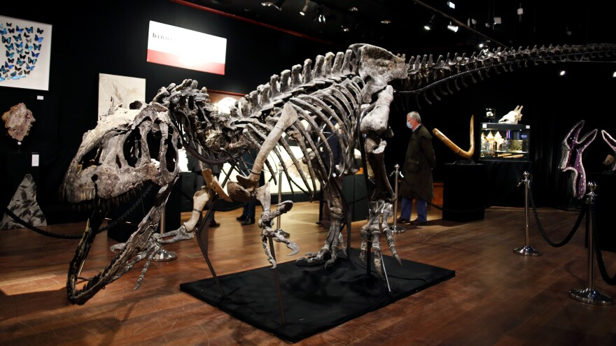A skeleton of an allosaurus dinosaur, on display at Drouot auction house in Paris in October. A new theory says the dinosaurs were killed by a comet fragment that originally came from the edge of the solar system.