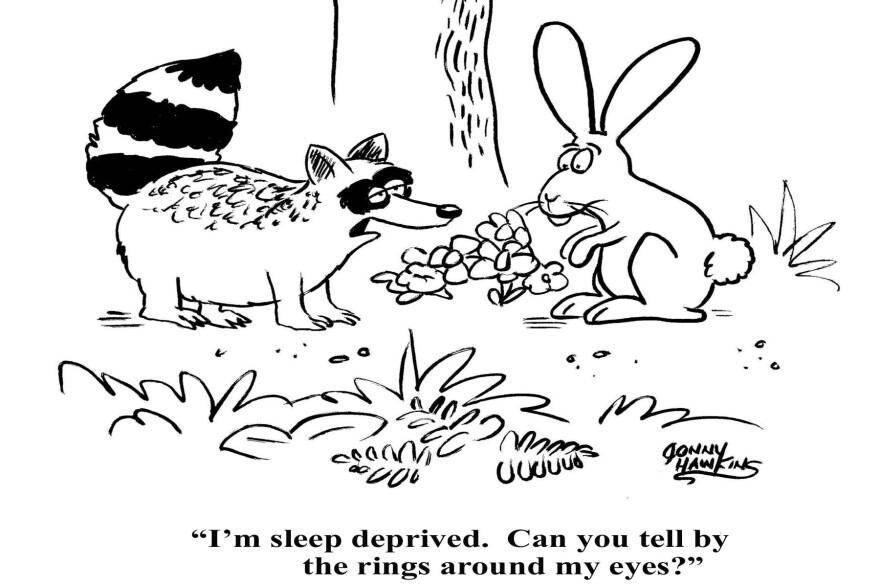 2-6-15_Raccoon_Sleep.jpg