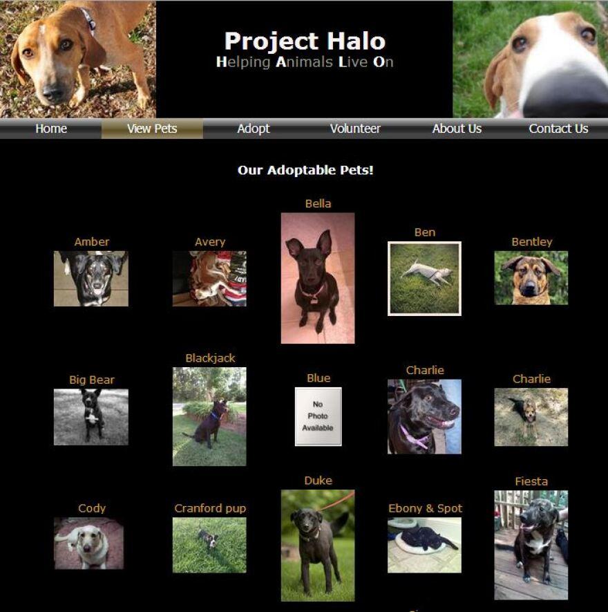 project_halo_animal_adoption_website.JPG