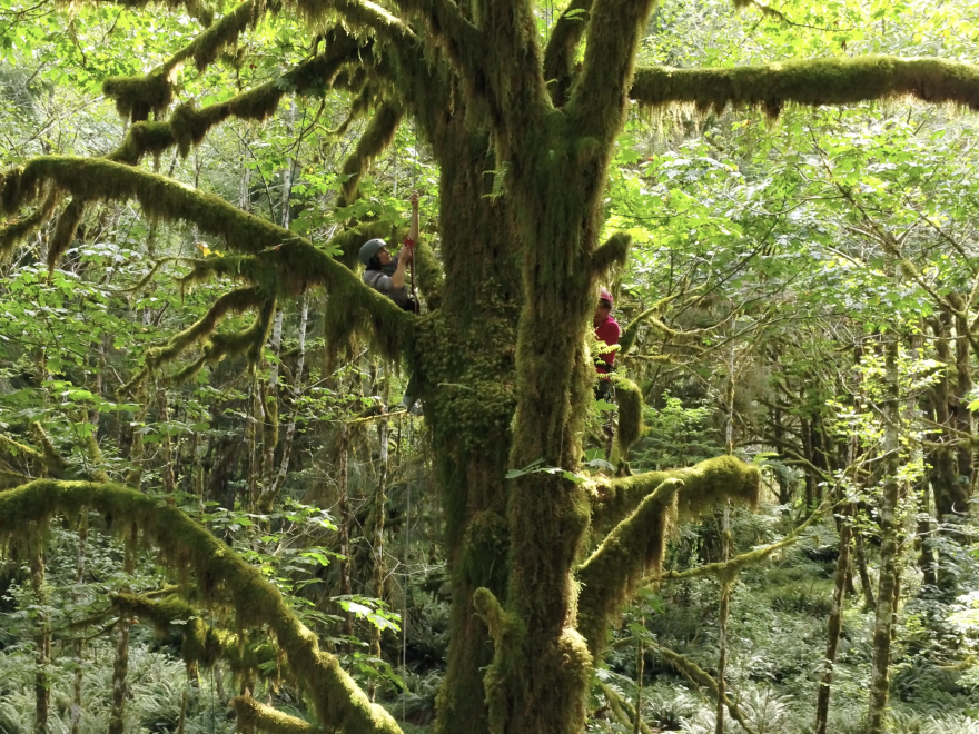 Researcher Nalini Nadkarni studies the ecology of the forest canopy.