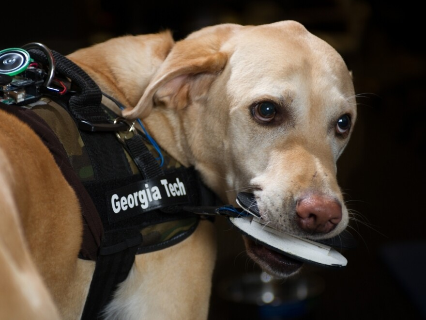"""A dog named Schubert activates the """"bite sensor."""" The FIDO vest can call 911 or send a GPS signal to handlers, among other things."""
