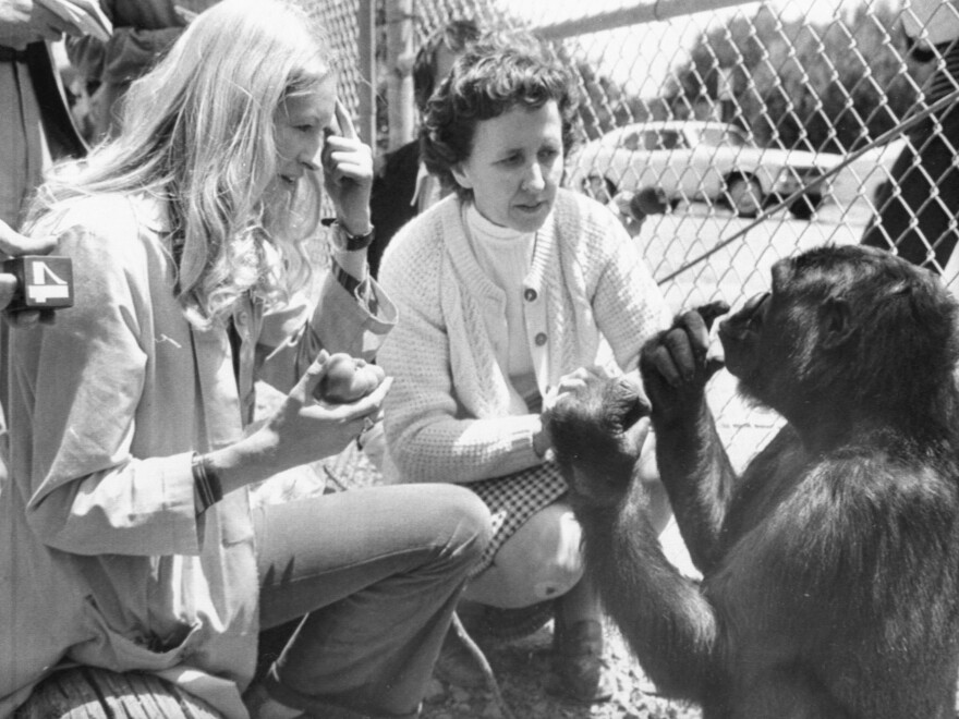 """Koko, the gorilla who became an ambassador to the human world through her ability to communicate, has died. She's seen here at age 4, telling psychologist Francine """"Penny"""" Patterson (left) that she is hungry. In the center is June Monroe, an interpreter for the deaf at St. Luke's Church, who helped teach Koko."""