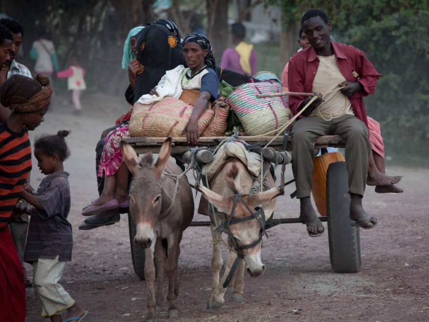Donkeys in Ethiopia are often overworked, neglected and abused.