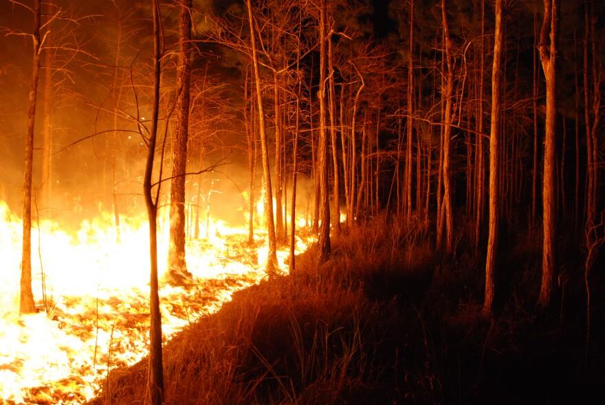 wildfire_via_flickr_usfws.jpg