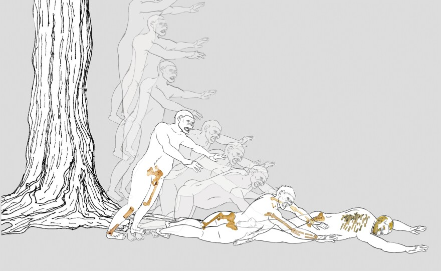 An illustration shows how Lucy might have fallen from a tree, and the broken bones stemming from her fall.