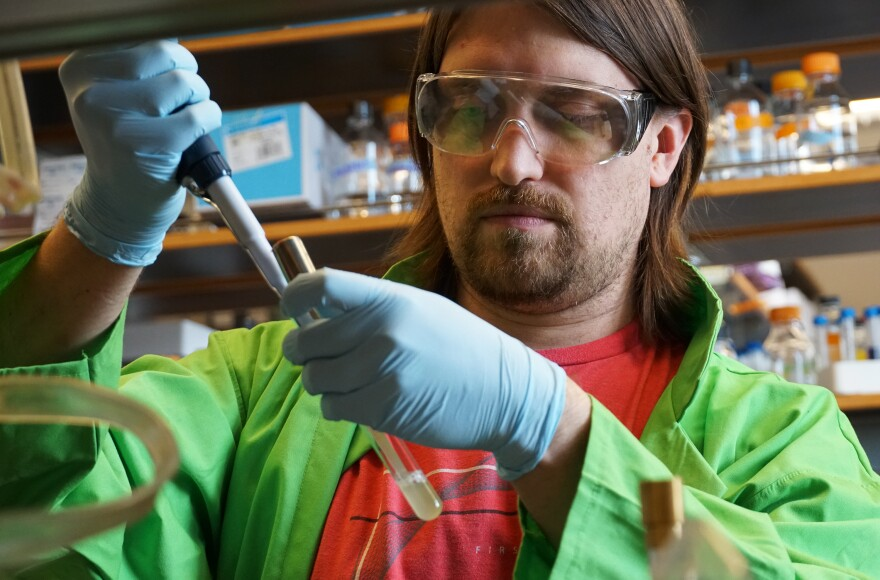 Washington University postdoctoral researcher Corey Westfall, shown here, is part of a team investigating how the chemical triclosan interferes with antibiotic treatment.