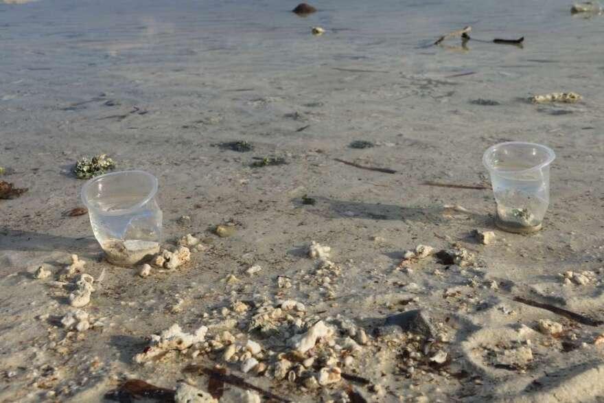 plastics-in-water-via-wikimedia-commons.jpg