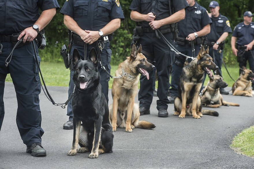 A photo of K-9 dogs on leashes which are held by police officers.