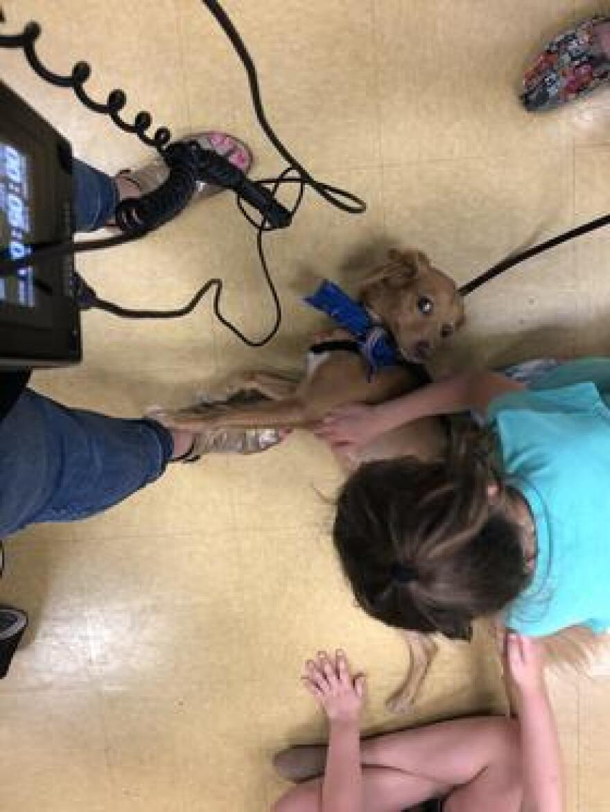 Above, Sophie greets Patches. Below, therapy dog Emma, a rescue from Puerto Rico, lays on the feet of WLRN reporter Jessica Bakeman during a Therapy Dog Thursday event in Parkland over the summer.