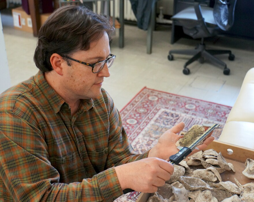 Torben Rick, an anthropologist at the Smithsonian's National Museum of Natural History and lead author of the research, examines a 1,500-year-old oyster shell in the museum's collection.