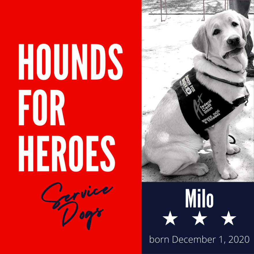 Hounds-Milo-4Aug.png