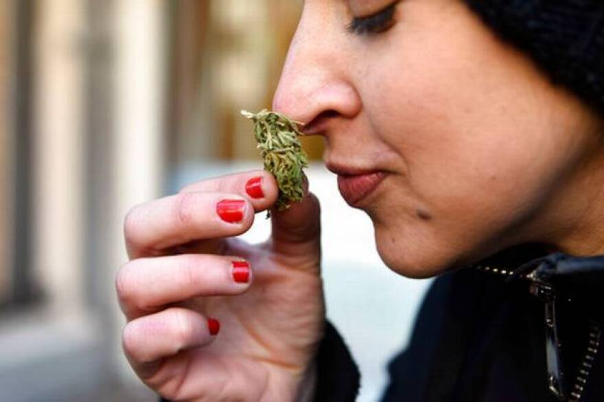An Uruguayan woman smells the marijuana she purchased legally at a Montevideo pharmacy on Wednesday.