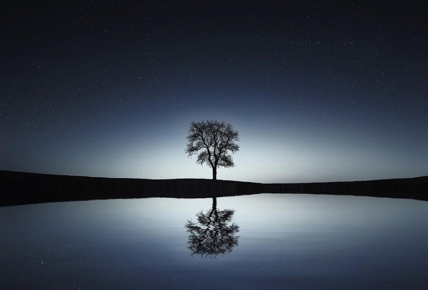 tree_reflection_water.jpg