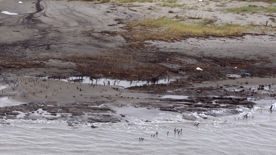 BP is scaling back its cleanup efforts from the Deepwater Horizon oilspill in areas outside Louisiana. Here, a photo from last September shows alluvial clay and tar mats on the shore of Elmer's Island, in Jefferson Parish, La.
