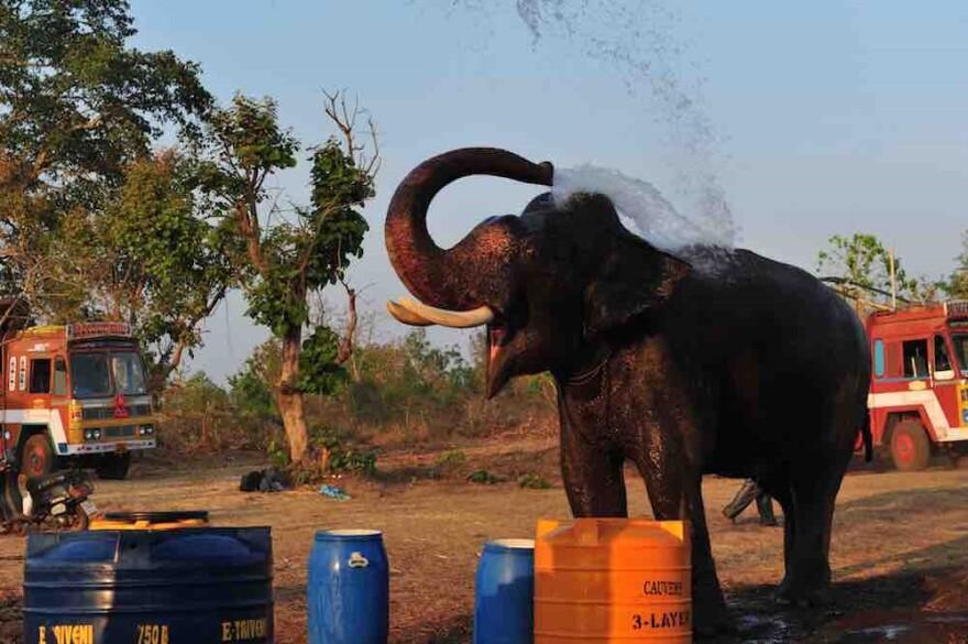080817_cj_captive_elephant_elephants_in_the_coffee.jpg