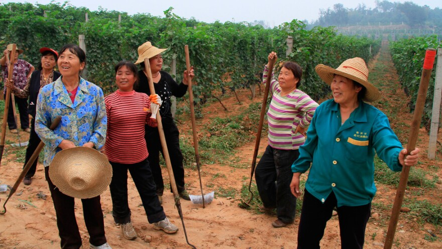 Workers in a Chinese vineyard pause for a break in the new documentary <em>Red Obsession</em>.