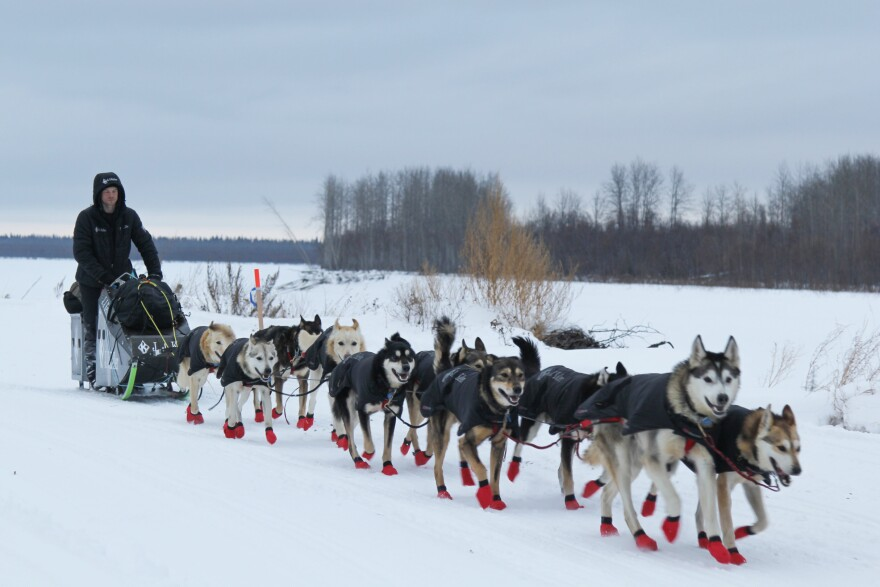 Dallas Seavey leaves Koyukuk after taking his 8 hour rest in the 2017 Iditarod. Seavey vigorously denies that he drugged his team, and faults the Iditarod's board of directors for mishandling the investigation, hurting his reputation in the process.