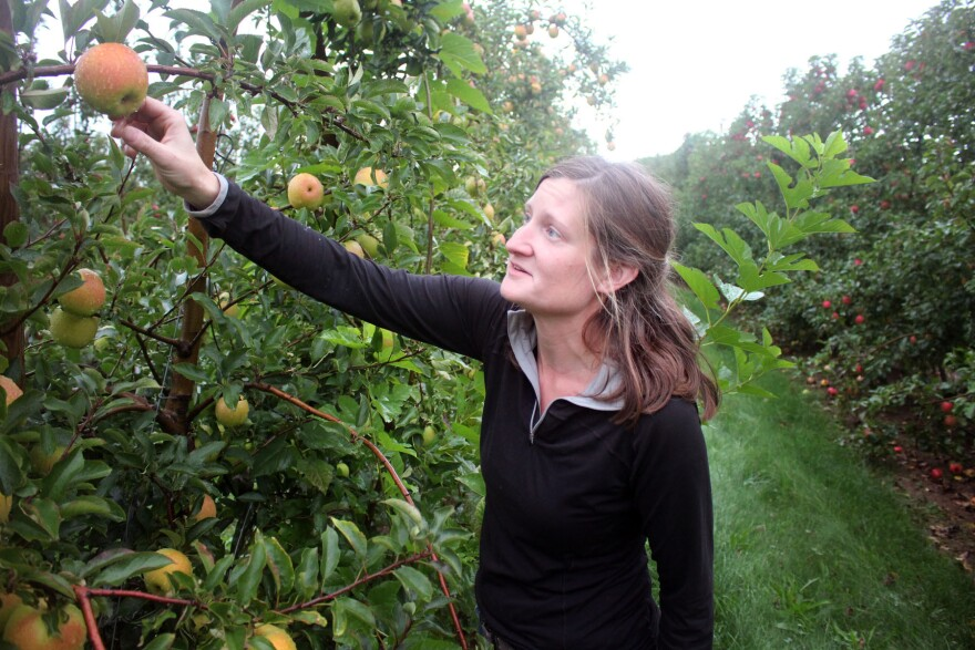 """Sydney Kuhn owns <a href=""""http://www.kuhnorchards.com/"""">Kuhn Orchards</a> in Cashtown, Pa. """"We've actually had customers at market ask us about SweeTango,"""" she says. """"And we explain that it's a club variety, and we are not part of the club, so we cannot grow that apple."""""""
