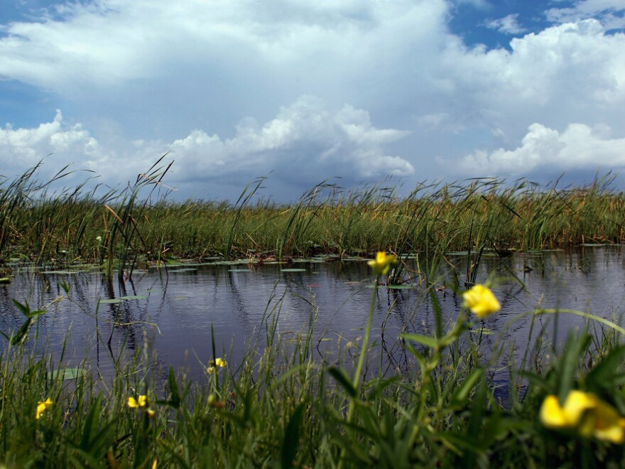 Florida Gov. Rick Scott says his administration will focus on restoring the Everglades. There are skeptics, however, because Scott oversaw cuts to restoration programs in his first year in office.