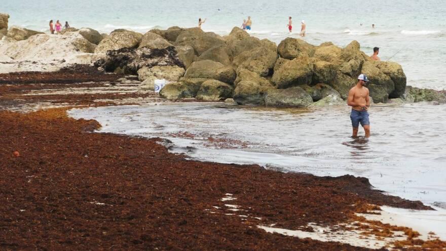 MiamiBeach_seaweed03FishingEKM.jpeg
