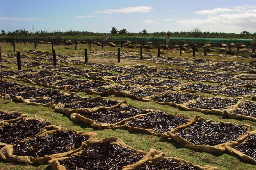 Vanilla pods dry in the sun in northwest Madagascar's Ambanja region, releasing their scent for miles around.