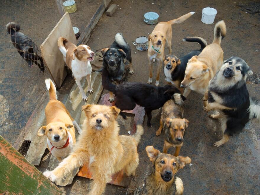 straydogs.jpg