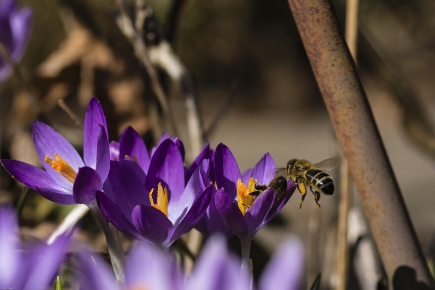 bee_on_flowers.jpg