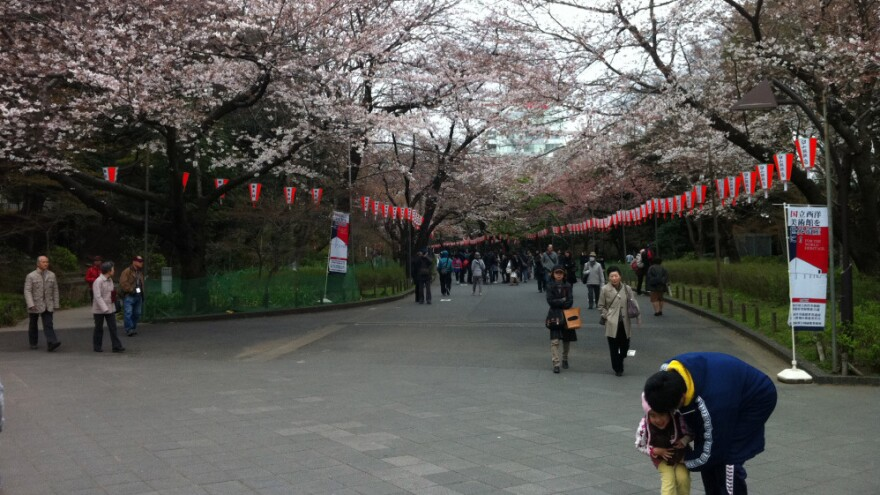 With its bountiful cherry blossoms in full bloom, Ueno Park was a draw for Tokyo residents over the weekend, some of whom ignored discouragement from the city's governor and carried out their annual <em>hanami </em>gatherings despite Japan's crisis.