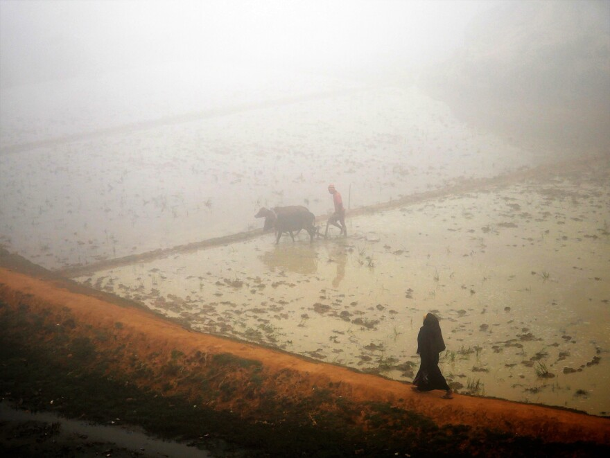 A Rohingya woman walks past a flooded farm near the Kutupalong Refugee Camp in Bangladesh, where the monsoon season started in June and has caused casualties and landslides.