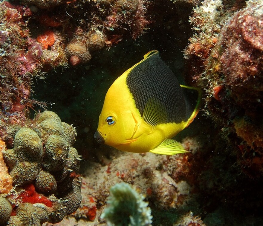 Coral_with_Fish_by_Peter_J.jpg