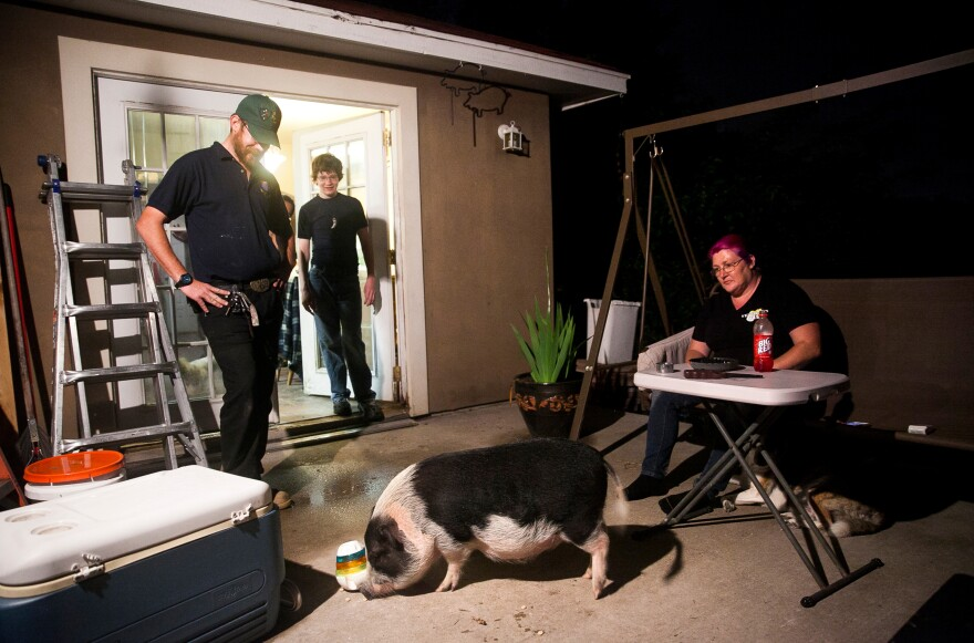 Davidson watches his pot-bellied pig eat a snack at his home in San Antonio, Texas. Davidson and his wife, Maria (right), also own five dogs, four cats and two bearded dragons. Although none of his pets are service animals, Davidson says they help him emotionally.
