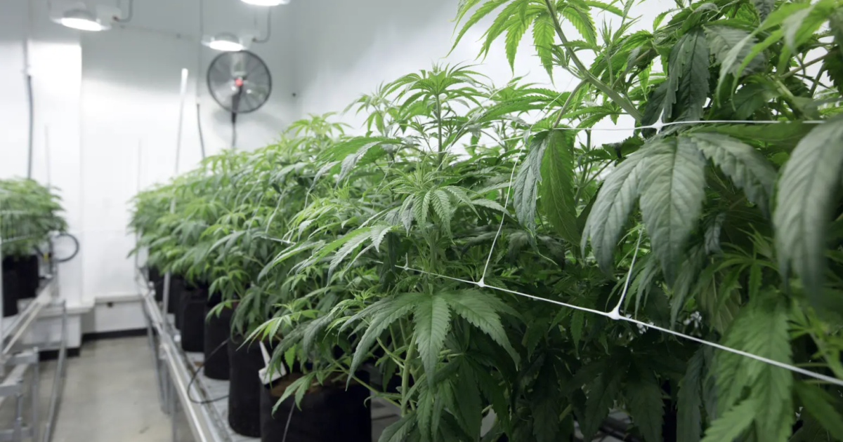 In Economic Crisis, Texas Democrats Push To Legalize Pot. Key Republicans Likely Stand In The Way.