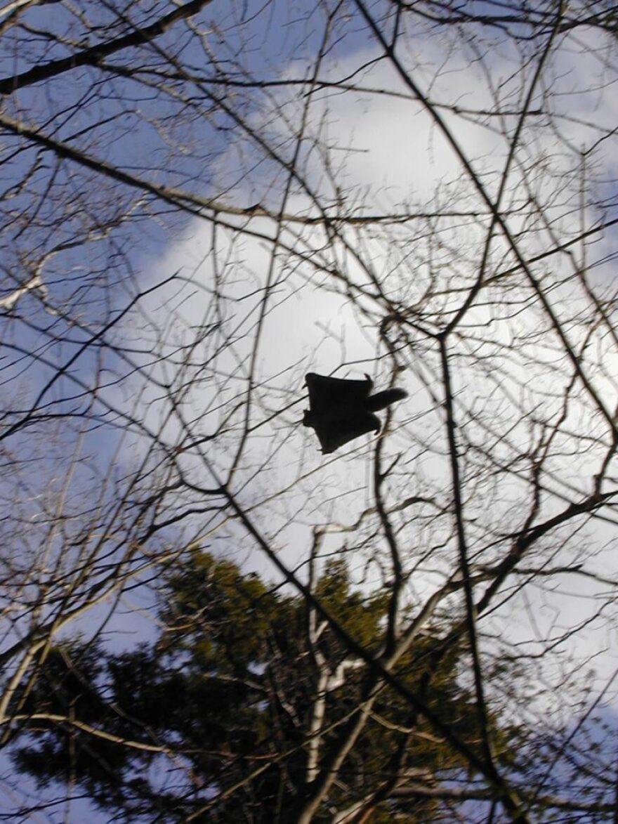 Squirrel-in-flight-768x1024.jpeg