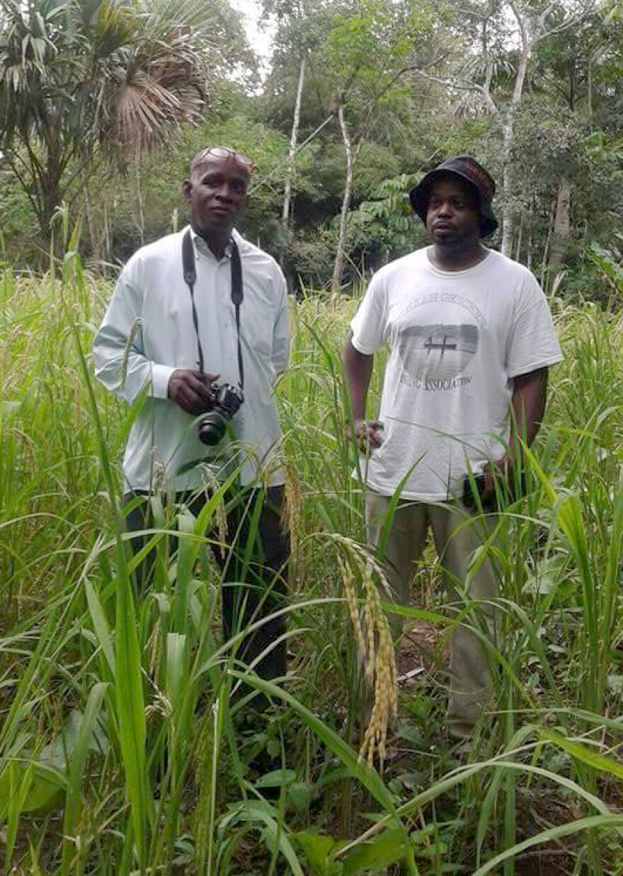 """Ethnobotanist Francis Morean of Trinidad and Chef Benjamin """"B. J."""" Dennis of South Carolina stand in a field of Moruga Hill Rice in southern Trinidad. This rice is a remarkable link between West Africa, the Gullah-Geechee sea islands of the American South, and the Merikin settlements of southern Trinidad."""