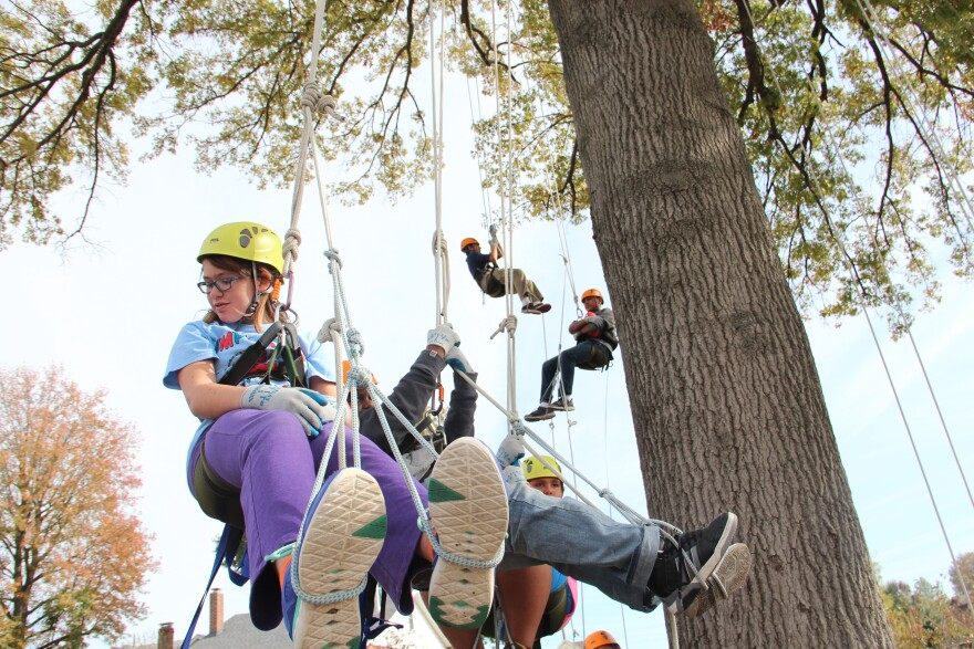 Maplewood Richmond Heights Middle School students hanging from ropes in an oak tree.
