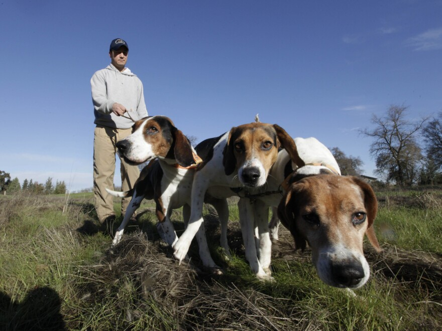 Josh Brones walks his hunting dogs, Dollar (from left), Sequoia and Tanner, near his home in Wilton, Calif., in 2012.