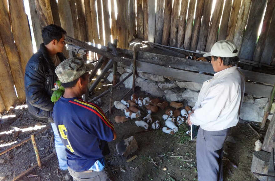 Peruvian farmers talk to a staff member of the aid group World Neighbors about getting a loan to invest in their guinea pig farm.