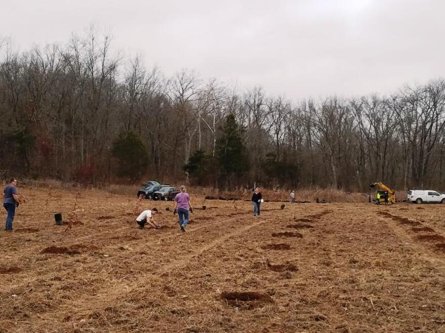 Staff from the Missouri Department of Natural Resources, the City of Fredericktown and the U.S. Fish & Wildlife Service working together to re-establish a floodplain forest in late 2017.