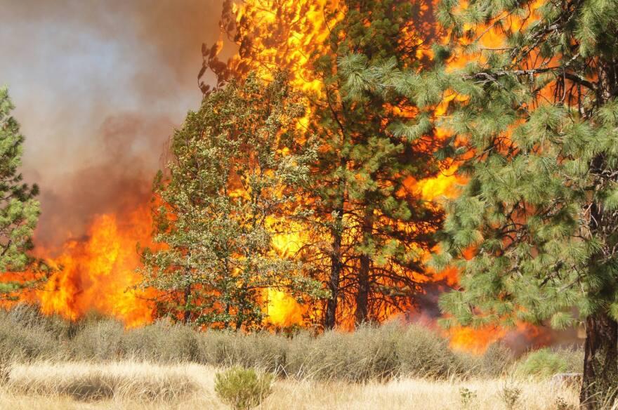 redwood_highway_fire.jpg
