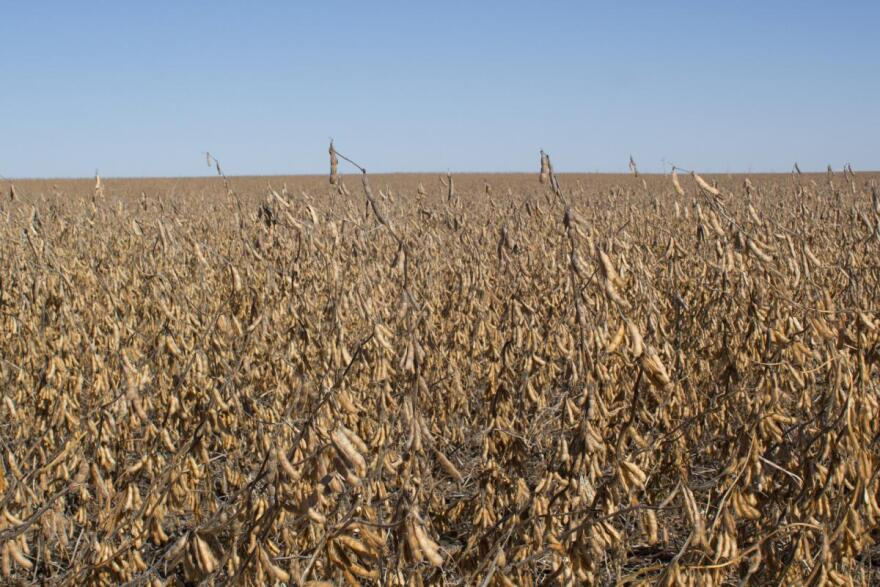Despite many rainy days this fall in much of the Midwest, farmers harvested a near record amount of soybeans.