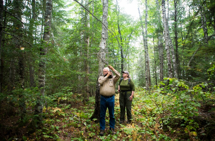 Wildlife Research Institute biologists Lynn Rogers and Sue Mansfield use an antenna while trying to locate a radio-collared bear in the woods near Ely, Minn. in 2012.