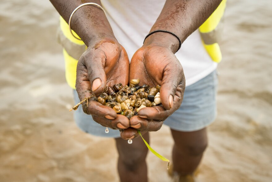photo of Ugandan Man holding infected snails