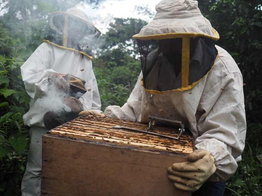 Domingo Enoc Toma López and a neighbor check on a hive in his coffee parcel.