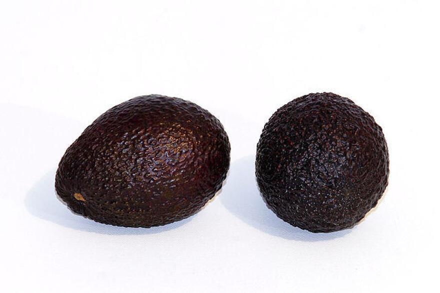 The hass avocado has darker skin than Florida's green-skin variety.