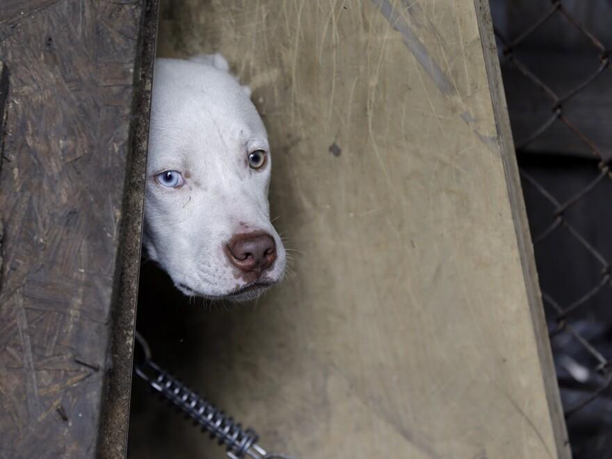 A stray dog in Detroit last week.